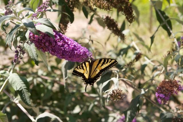 Bird and Butterfly Garden 8