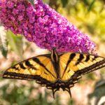 Tijuana River Valley Regional Park: Bird & Butterfly Garden