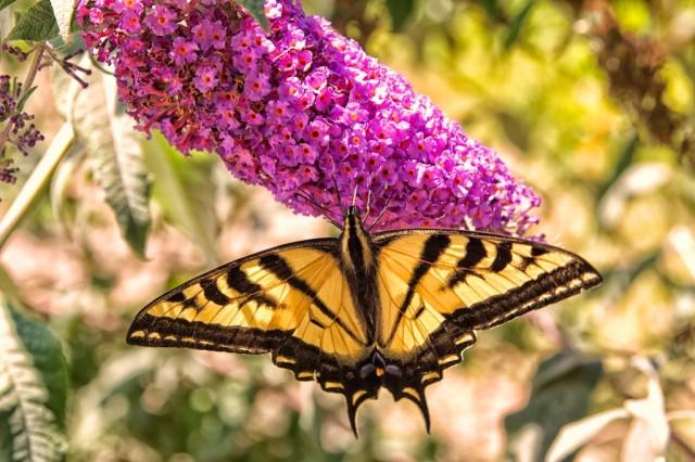 Bird and Butterfly Garden 9