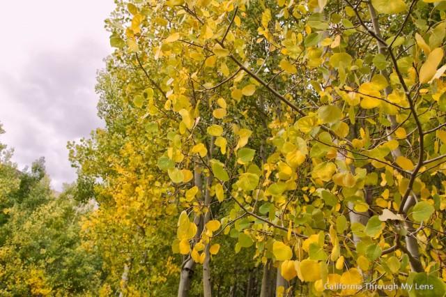 Fall in California 3
