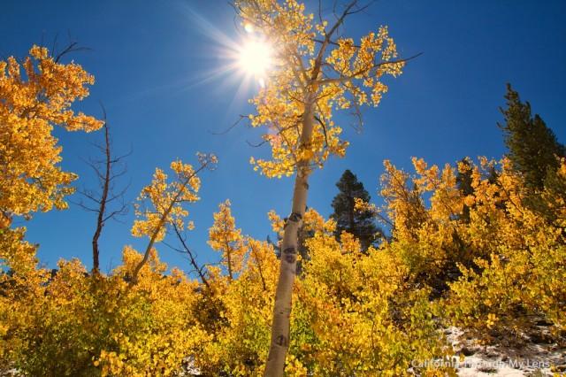 Fall in California 8