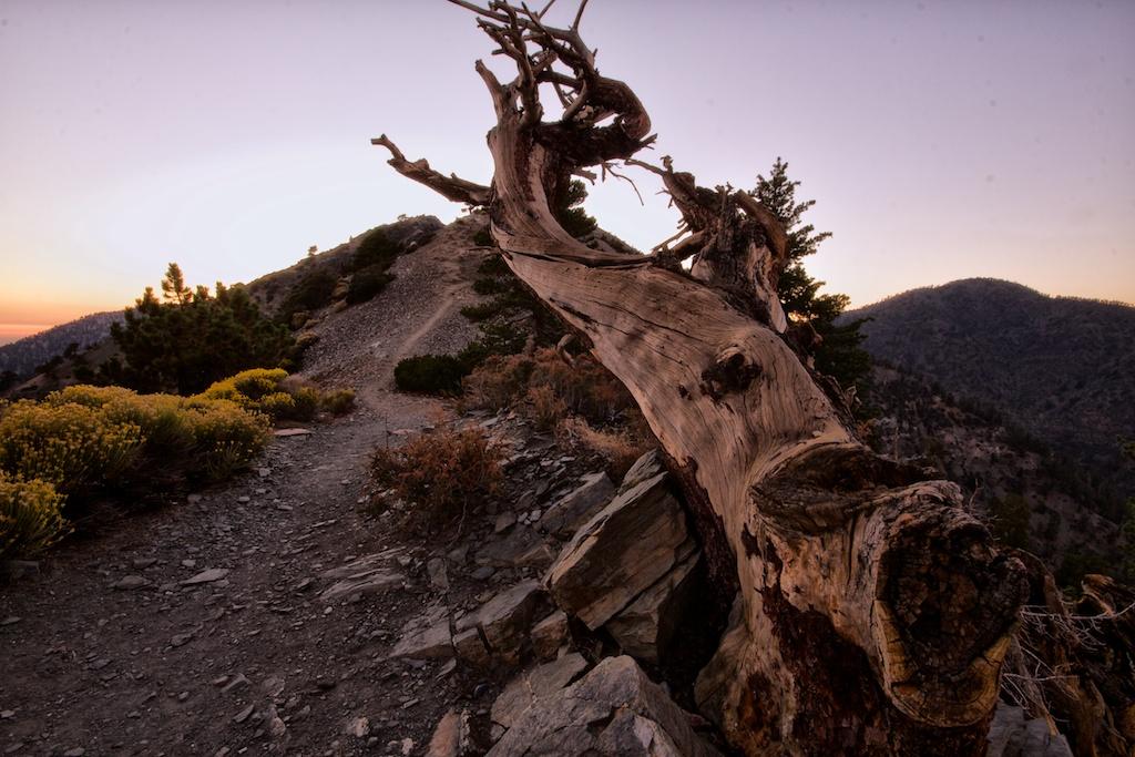 Mt Baldy Night Hike 22