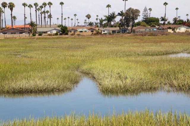 Tijuana Estuary 21