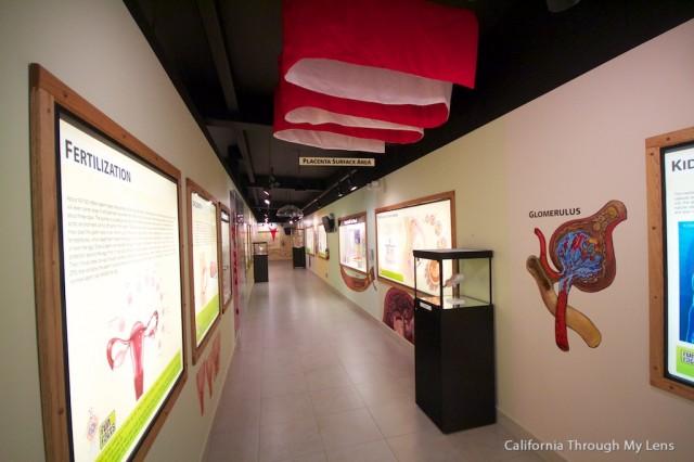 Creation Museum 21
