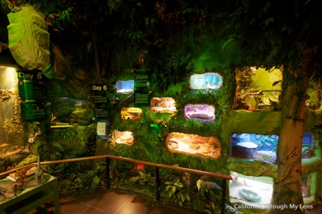 Creation Museum 9