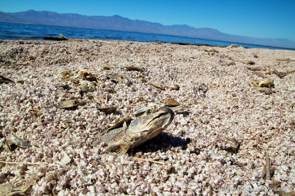 Salton Sea Attractions Art Mud Volcanoes and Dead Fish