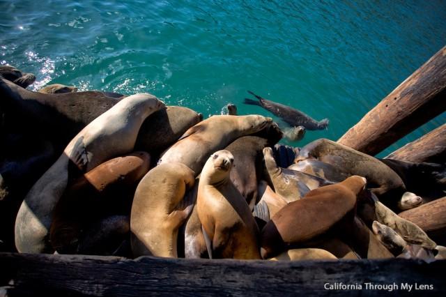 Avila Sea Lions 11