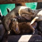 Sea Lions and Fish Markets on Port San Luis in Avila