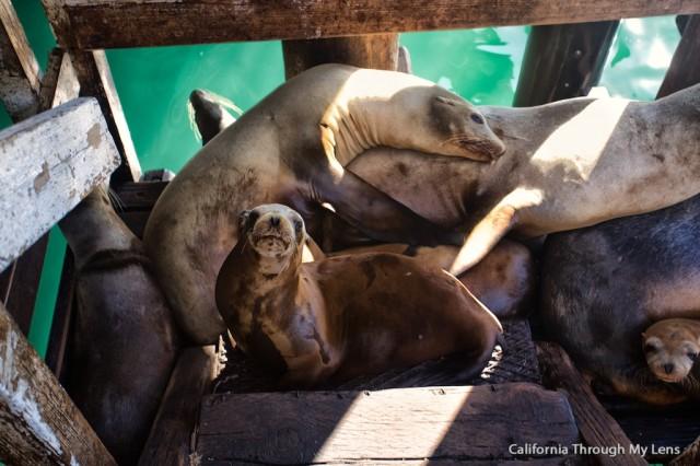 Avila Sea Lions 13