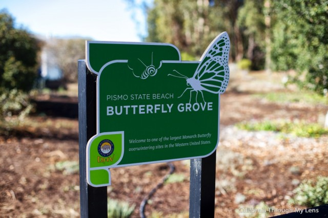 Monarch Butterfly Grove 1