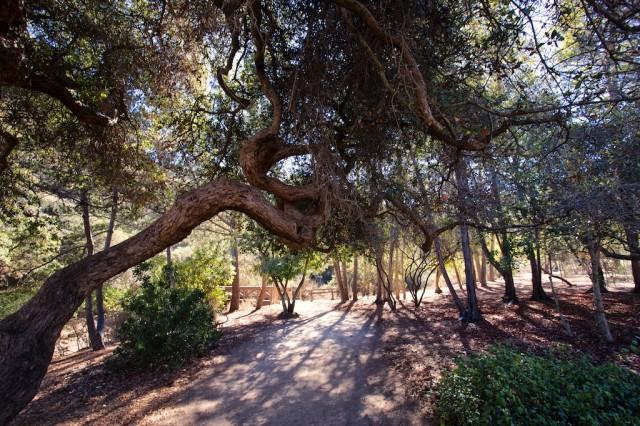 Wrigley Botanical Garden 8