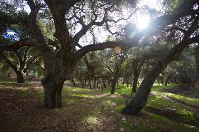 Bogart Park 1