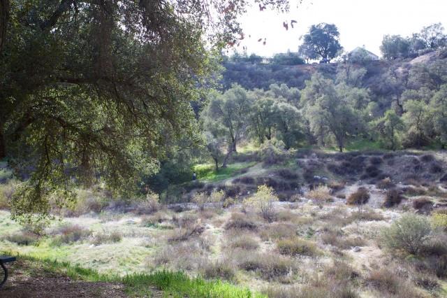 Bogart Park 17