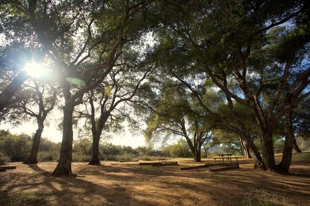 Bogart Park 25