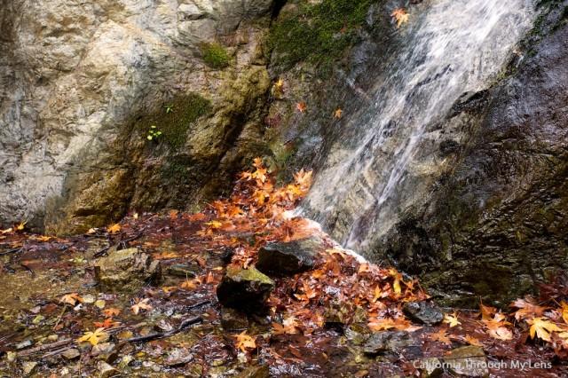 Pfeiffer Falls 19