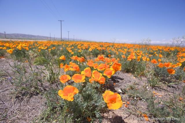 Poppy Reserve 11