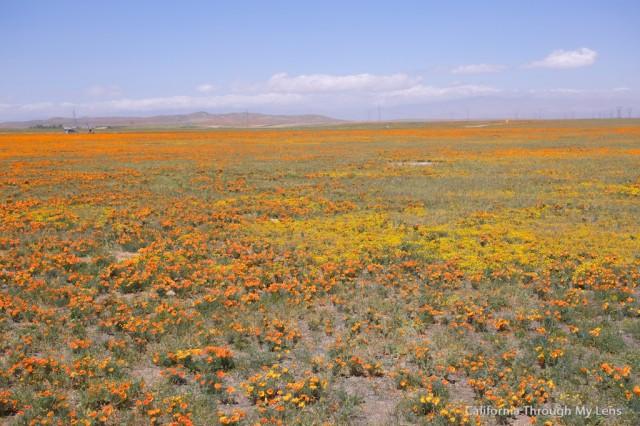 Poppy Reserve 14