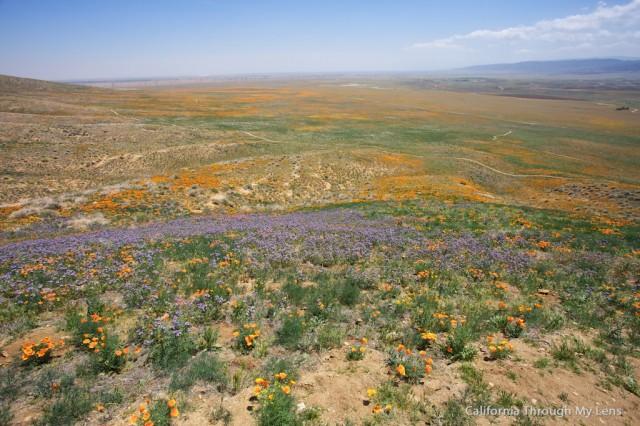 Poppy Reserve 16