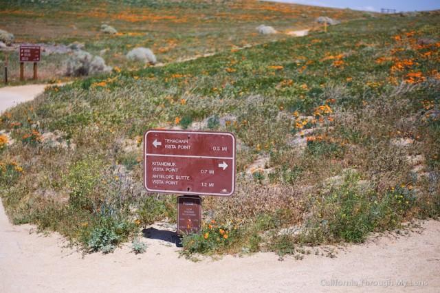Poppy Reserve 19