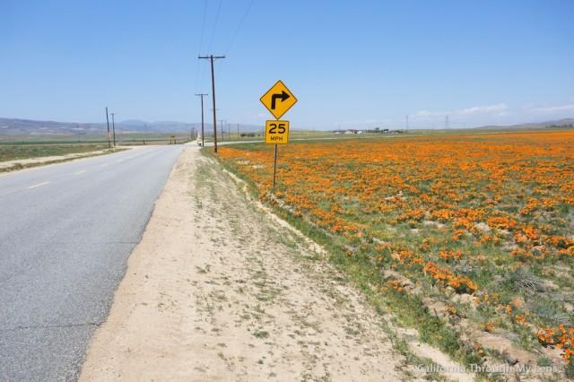 Poppy Reserve 2