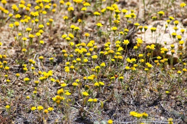 Poppy Reserve 23