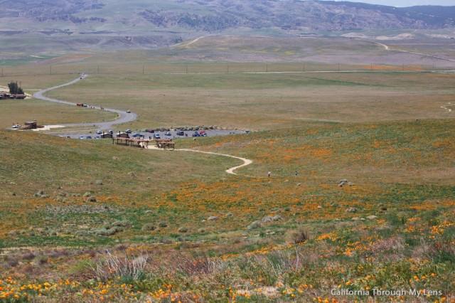Poppy Reserve 24