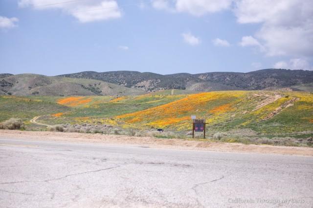 Poppy Reserve 25