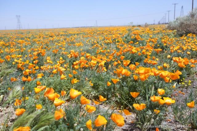 Poppy Reserve 3