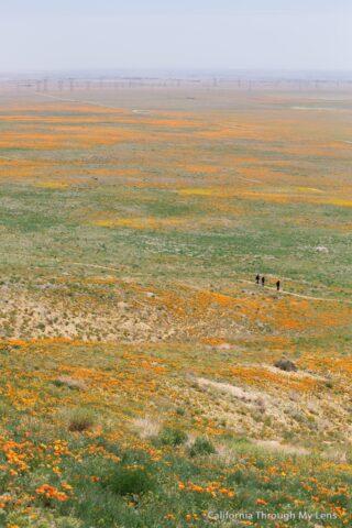 Poppy Reserve 5