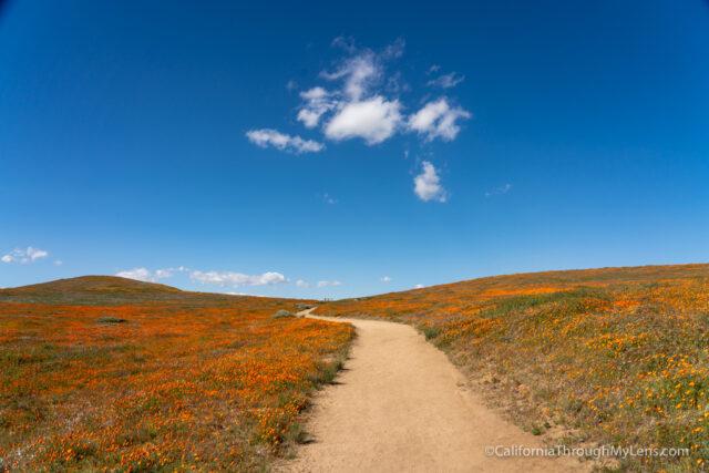 Antelope Valley California Poppy Reserve: Blankets of Orange