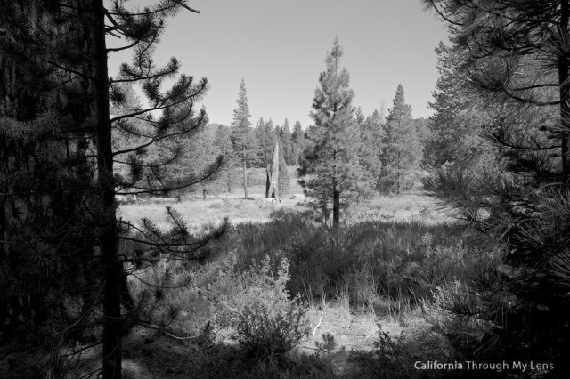Donner Camp Trail 5