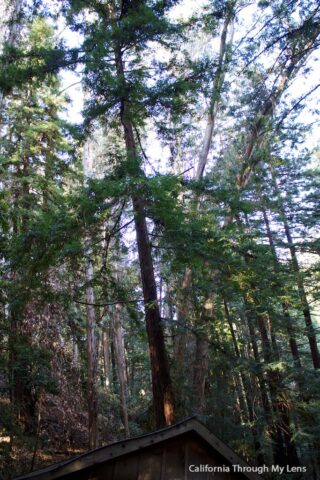Mystery Spot Santa Cruz 12