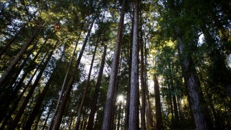 Five Parks to Visit in Santa Cruz and the Best Hike in Each