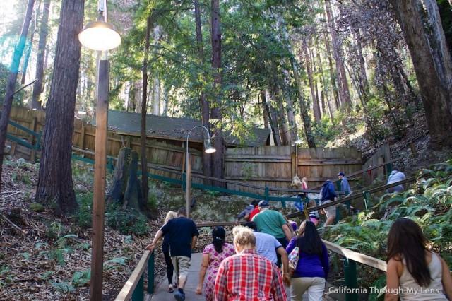 Mystery Spot Santa Cruz 7
