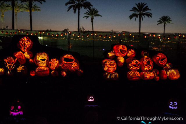 The Rise Of The Jack Olanterns 5000 Professional Pumpkins In La