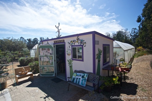 Loofa Farm1