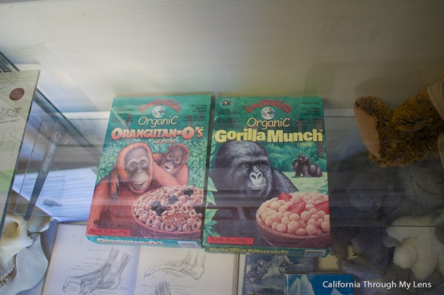 bigfoot discovery museum11