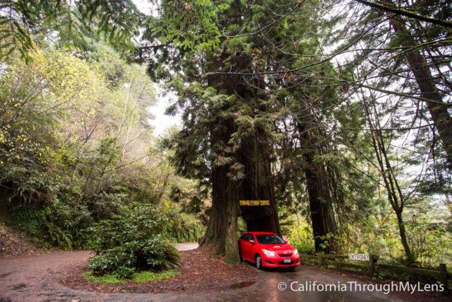 Drive thru Tree-3
