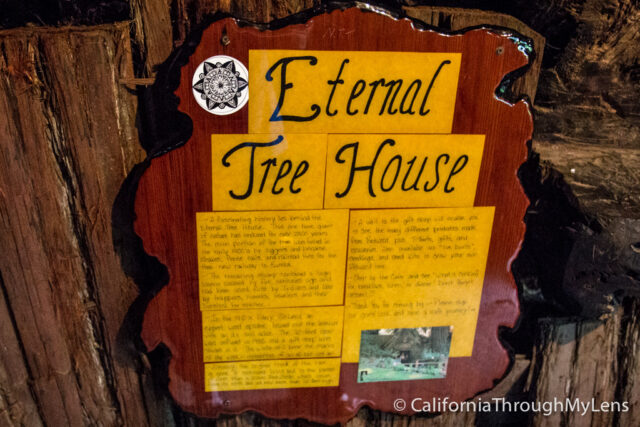 Eternal Treehouse-6