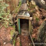 Eternal Treehouse: Fun Roadside Stop for Kids in Avenue of the Giants