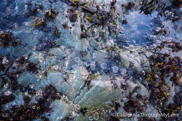 Glass Beach-8