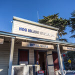 Hog Island Oyster Company: Shucking with a View
