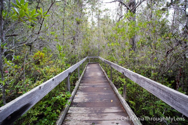 Pygmy Forest-19