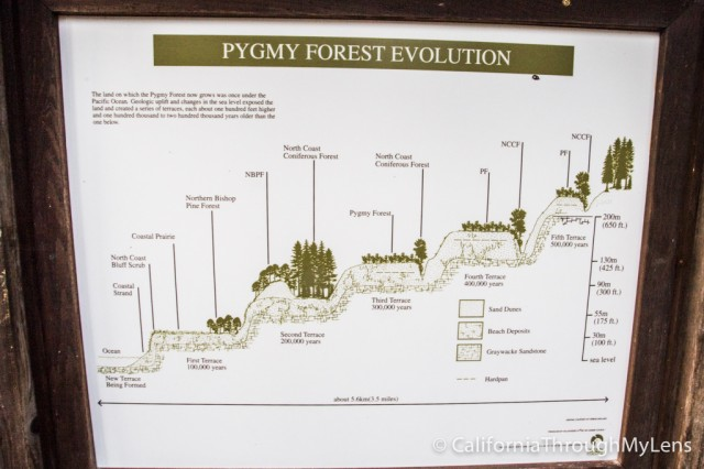 Pygmy Forest-3