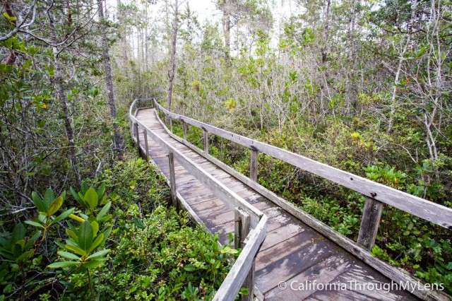 Pygmy Forest-4