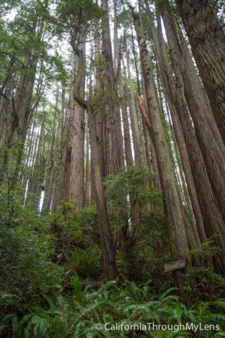 Tree of Mystery-10