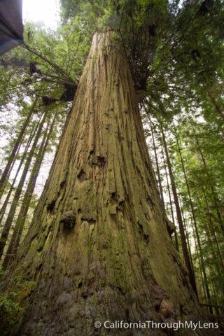 Tree of Mystery-17