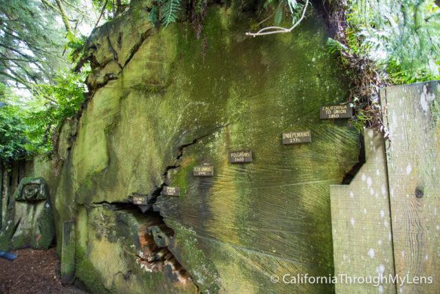 Tree of Mystery-27