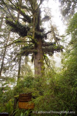 Tree of Mystery-4