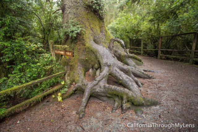 Tree of Mystery-5